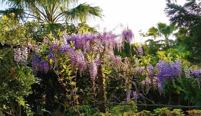 Colecciones - Jardin Botanico la Almunya del Sur