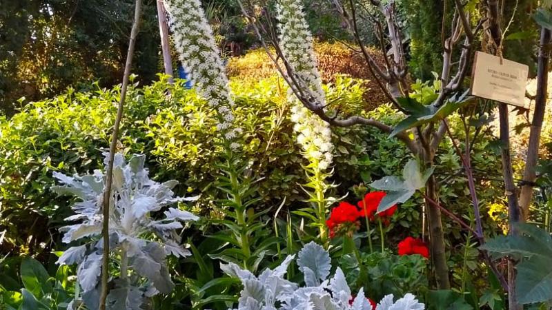 Primavera - Jardin Botanico La Almunya del Sur