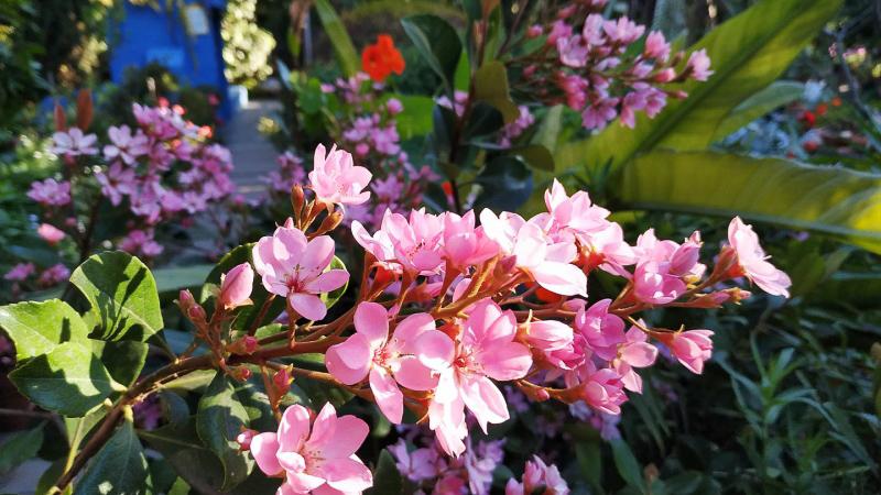 Primavera - Jardin Botanico La Almunya del Sur-10