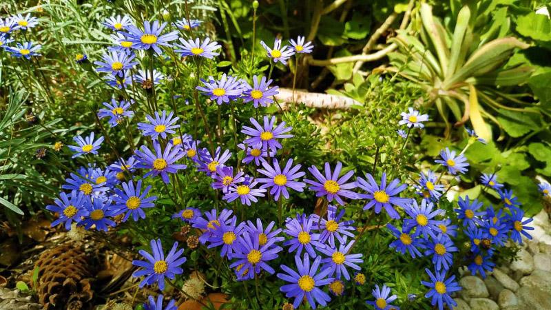 Primavera - Jardin Botanico La Almunya del Sur-12