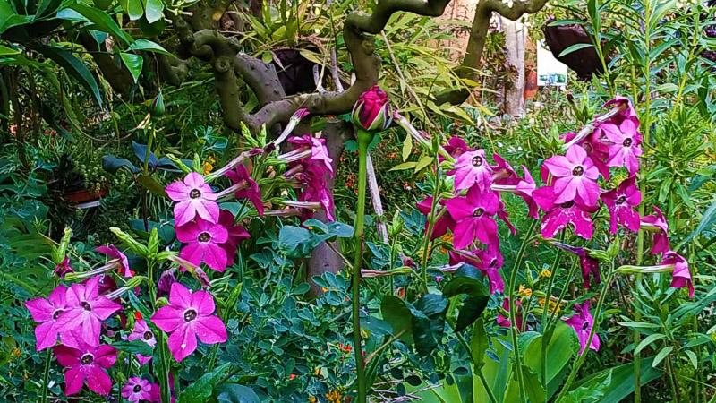 Primavera - Jardin Botanico La Almunya del Sur-13