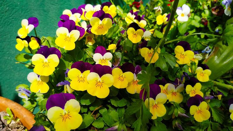 Primavera - Jardin Botanico La Almunya del Sur-14