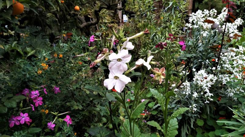 Primavera - Jardin Botanico La Almunya del Sur-2
