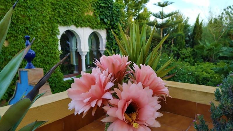 Primavera - Jardin Botanico La Almunya del Sur-24
