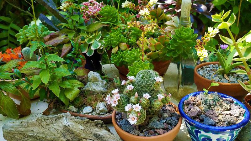 Primavera - Jardin Botanico La Almunya del Sur-29