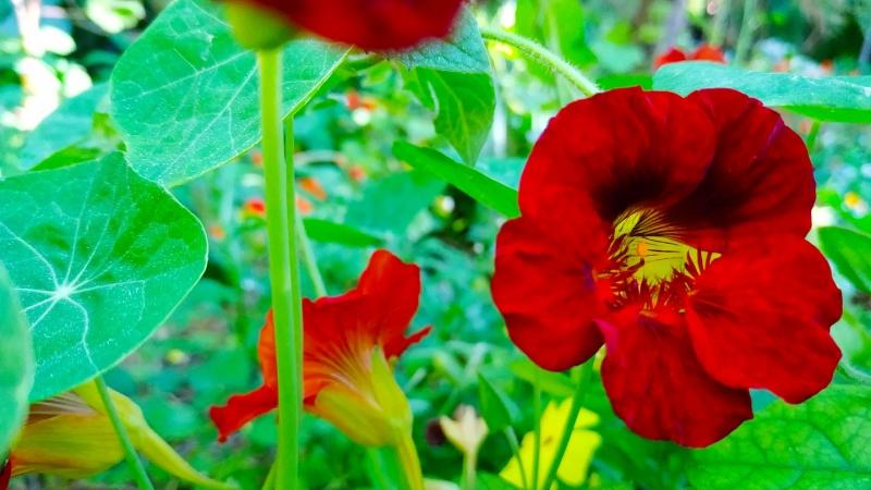 Primavera - Jardin Botanico La Almunya del Sur-30