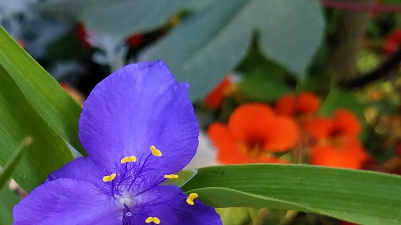 Primavera - Jardin Botanico La Almunya del Sur-32