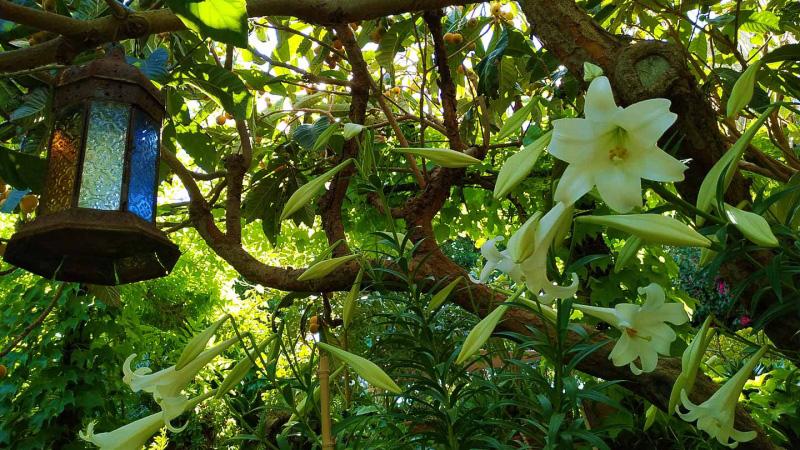 Primavera - Jardin Botanico La Almunya del Sur-34