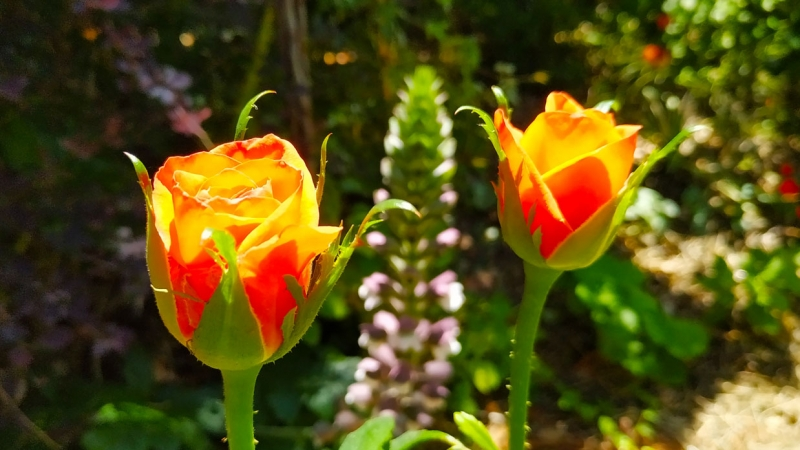 Primavera - Jardin Botanico La Almunya del Sur-36