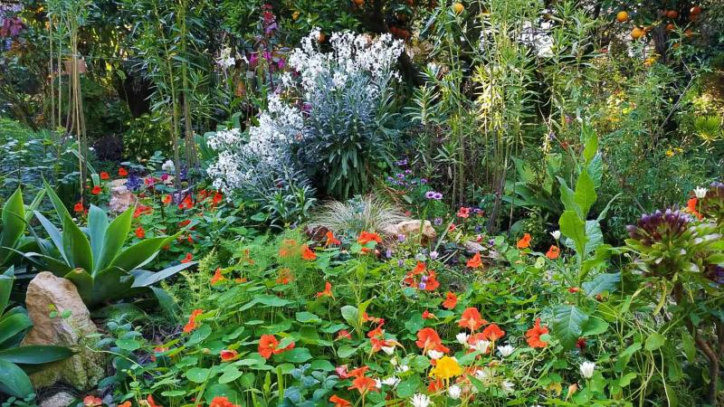 Primavera - Jardin Botanico La Almunya del Sur-4