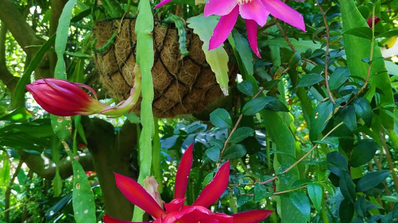 Primavera - Jardin Botanico La Almunya del Sur-41