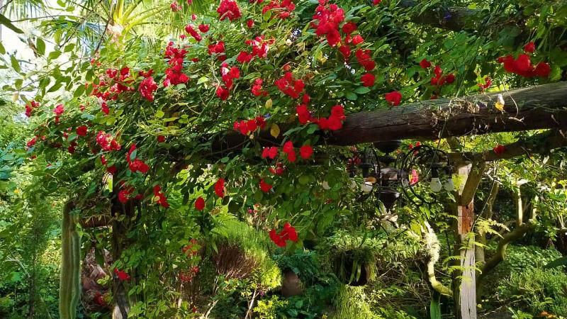 Primavera - Jardin Botanico La Almunya del Sur-43