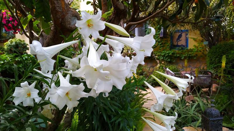 Primavera - Jardin Botanico La Almunya del Sur-44