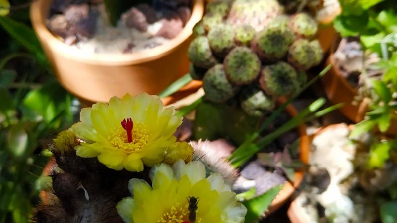 Primavera - Jardin Botanico La Almunya del Sur-48