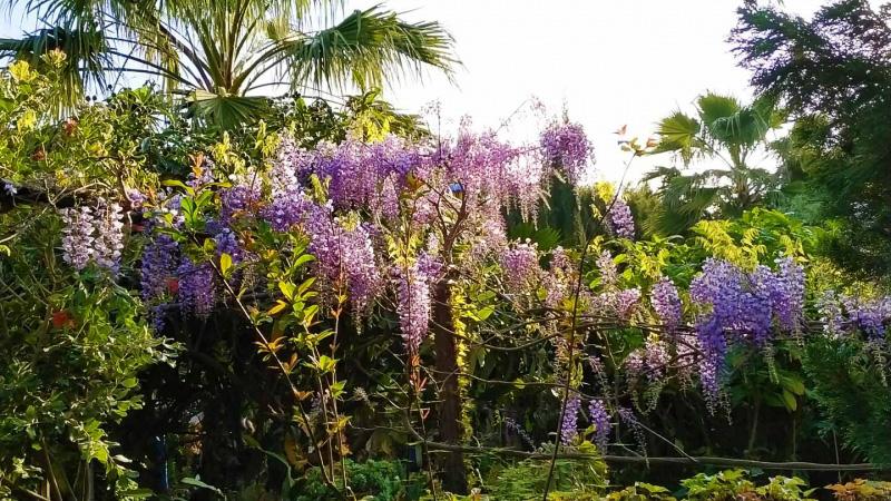 Primavera - Jardin Botanico La Almunya del Sur-6