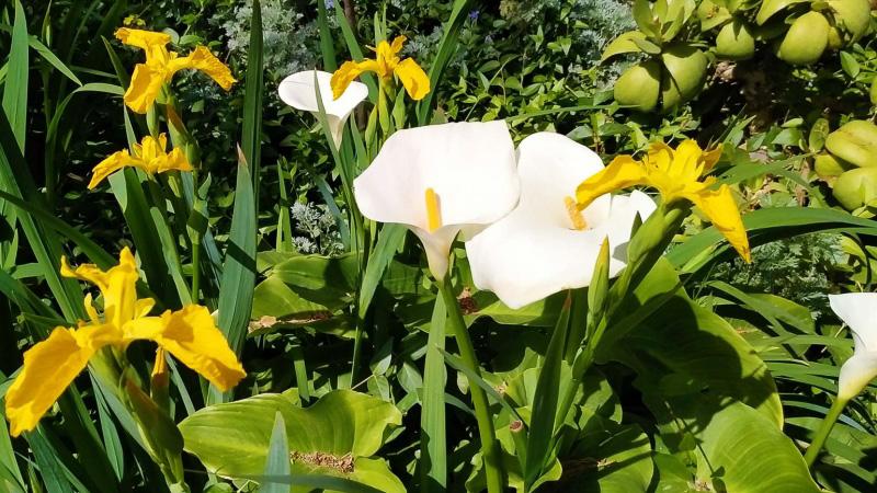 Primavera - Jardin Botanico La Almunya del Sur-8