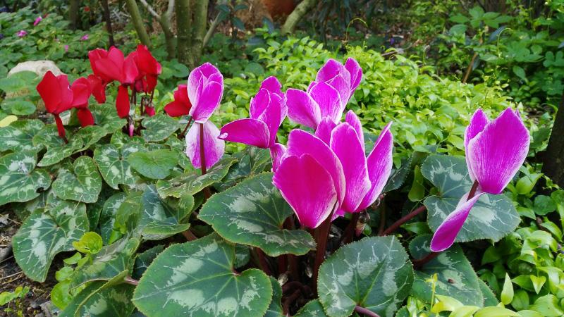 invierno-jardin-botanico-la-almunya-del-sur-2