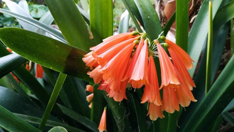 invierno-jardin-botanico-la-almunya-del-sur-43