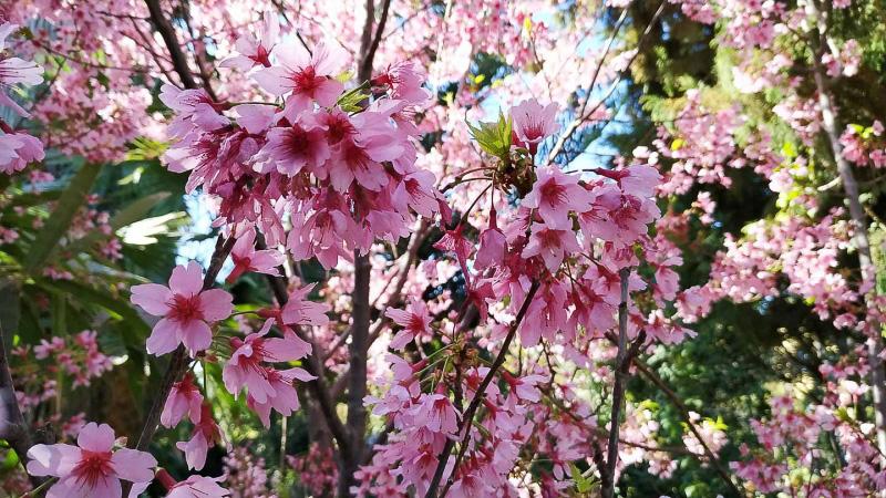 invierno-jardin-botanico-la-almunya-del-sur-44