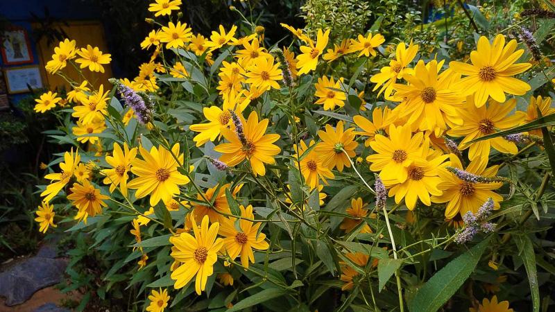 otoño-jardin-botanico-la-almunya-del-sur-17