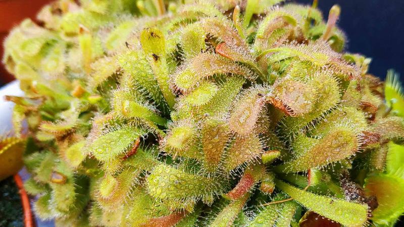 otoño-jardin-botanico-la-almunya-del-sur-21