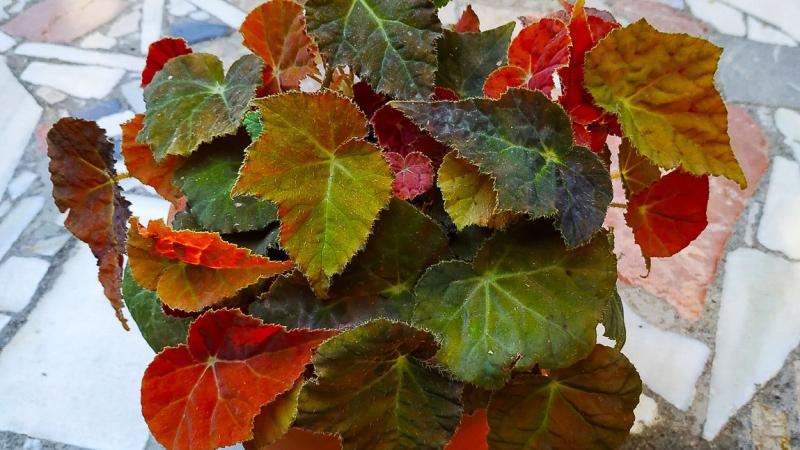 otoño-jardin-botanico-la-almunya-del-sur-30