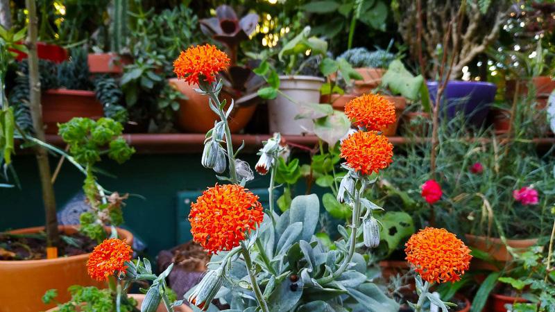 otoño-jardin-botanico-la-almunya-del-sur-32