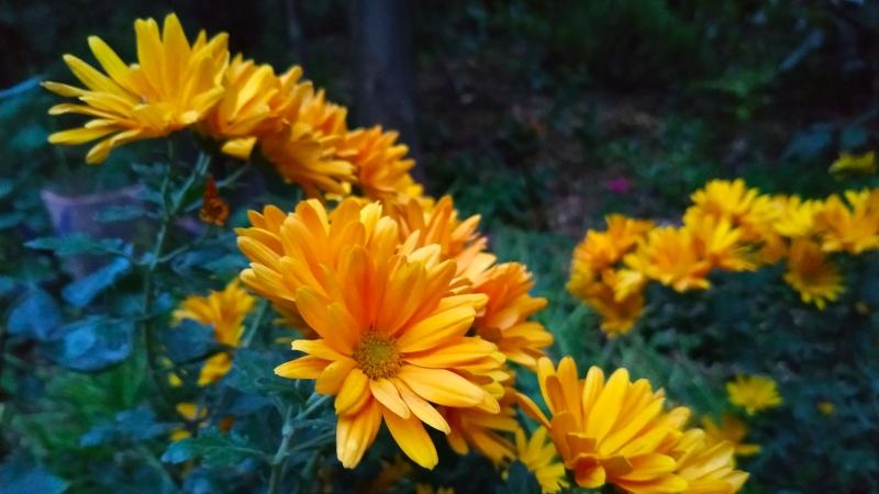 otoño-jardin-botanico-la-almunya-del-sur-35