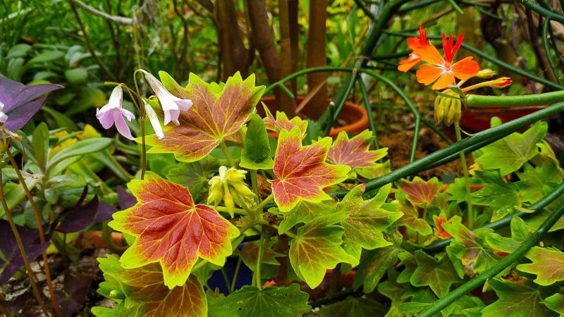 otoño-jardin-botanico-la-almunya-del-sur-36