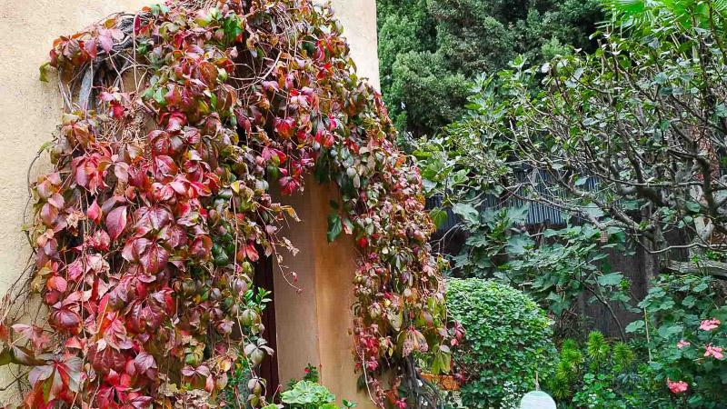 otoño-jardin-botanico-la-almunya-del-sur-39