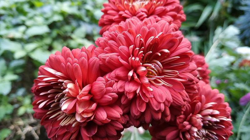 otoño-jardin-botanico-la-almunya-del-sur-40
