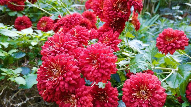 otoño-jardin-botanico-la-almunya-del-sur-42