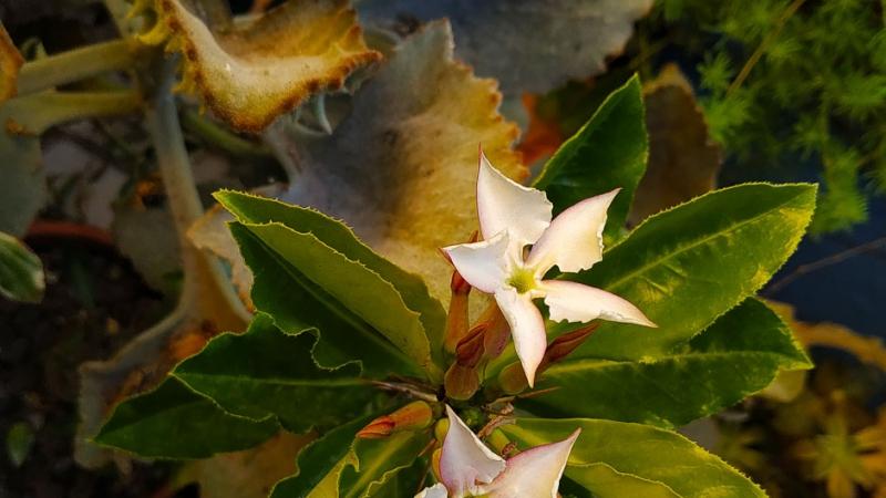 otoño-jardin-botanico-la-almunya-del-sur-46