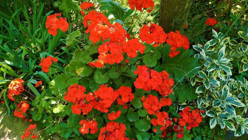 verano-jardin-botanico-la-almunya-del-sur-1