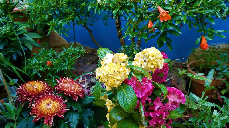 verano-jardin-botanico-la-almunya-del-sur-10