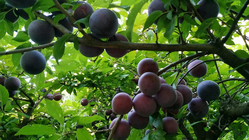 verano-jardin-botanico-la-almunya-del-sur-11