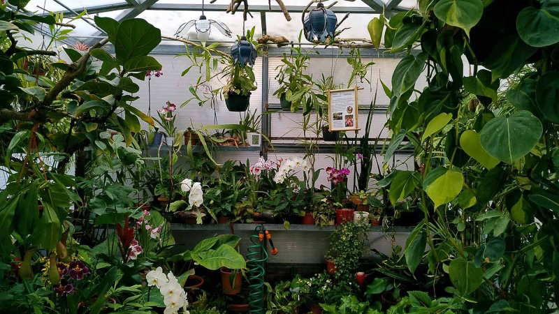 verano-jardin-botanico-la-almunya-del-sur-13