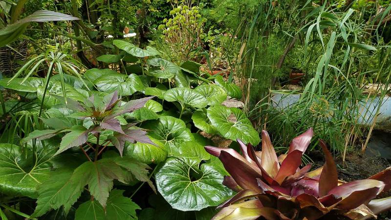 verano-jardin-botanico-la-almunya-del-sur-14