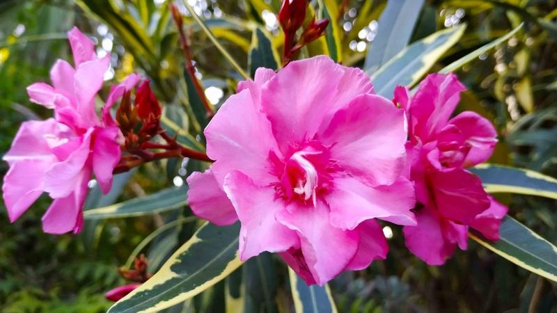 verano-jardin-botanico-la-almunya-del-sur-15