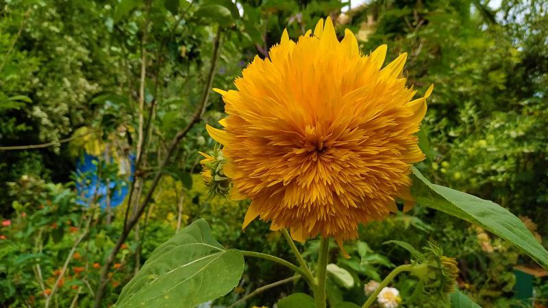 verano-jardin-botanico-la-almunya-del-sur-16