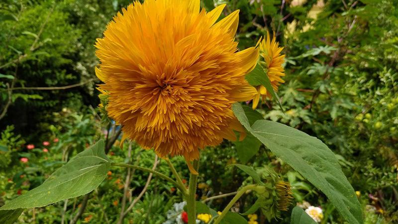 verano-jardin-botanico-la-almunya-del-sur-17