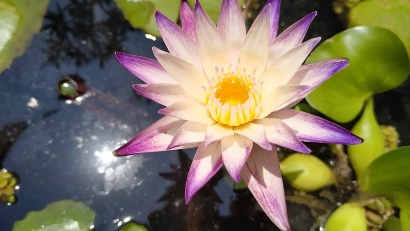 verano-jardin-botanico-la-almunya-del-sur-18