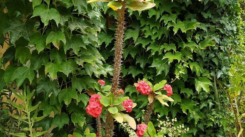 verano-jardin-botanico-la-almunya-del-sur-19