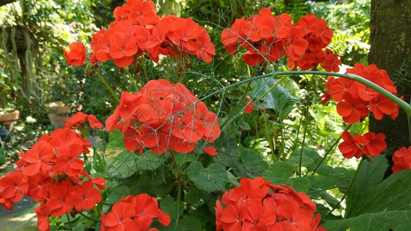 verano-jardin-botanico-la-almunya-del-sur-2