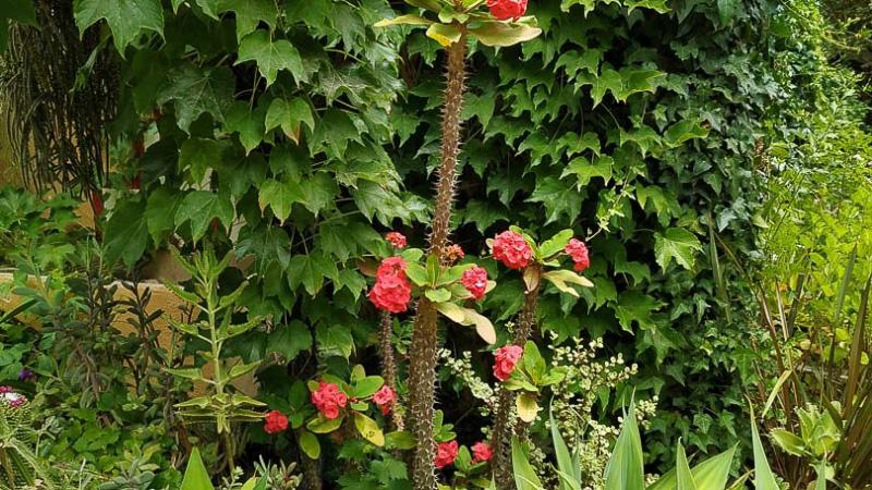verano-jardin-botanico-la-almunya-del-sur-20