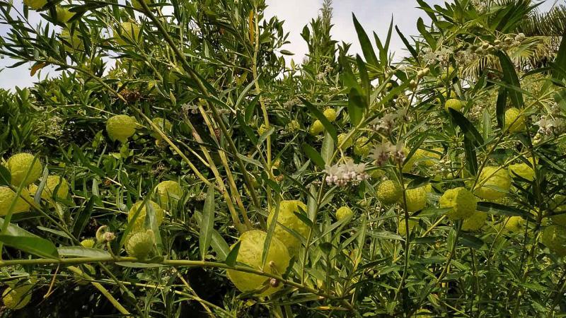 verano-jardin-botanico-la-almunya-del-sur-21