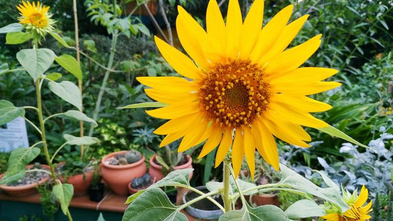 verano-jardin-botanico-la-almunya-del-sur-22