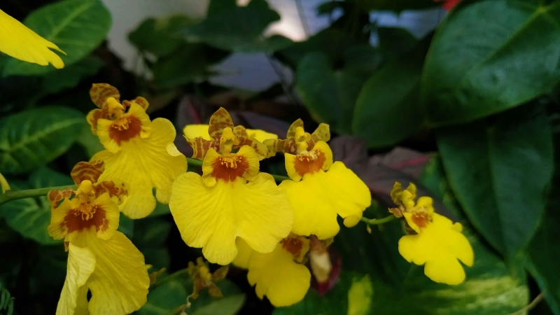 verano-jardin-botanico-la-almunya-del-sur-27