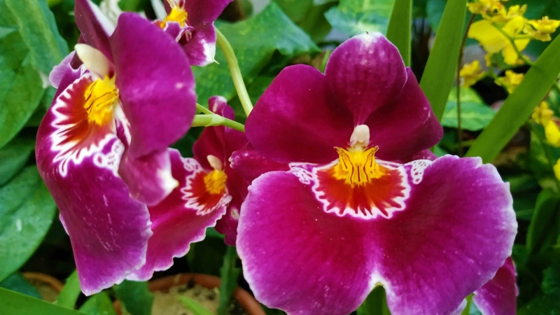 verano-jardin-botanico-la-almunya-del-sur-28