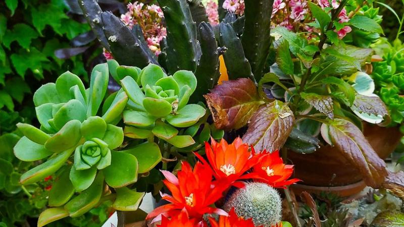 verano-jardin-botanico-la-almunya-del-sur-3